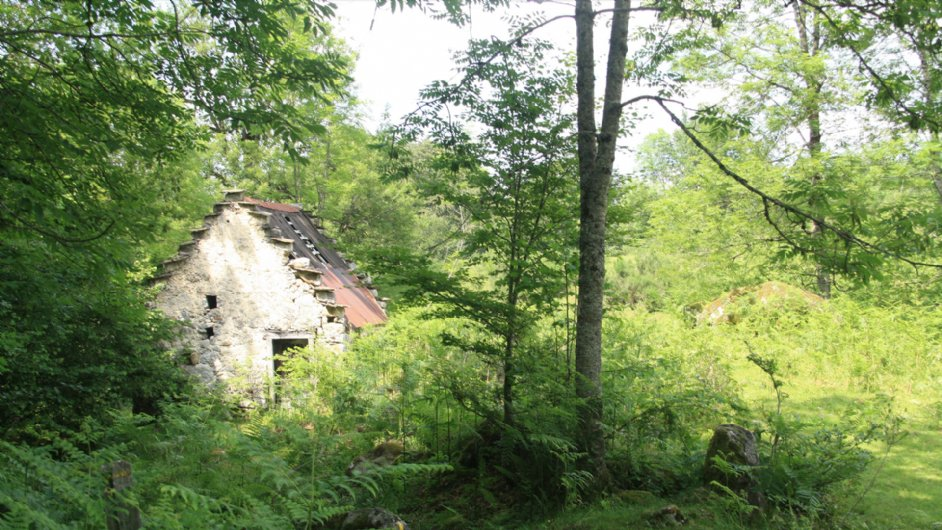 abandoned barn that will soon be covered by forest